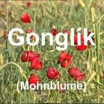 k-Akram Kiro Gonglik (Mohnblume)1